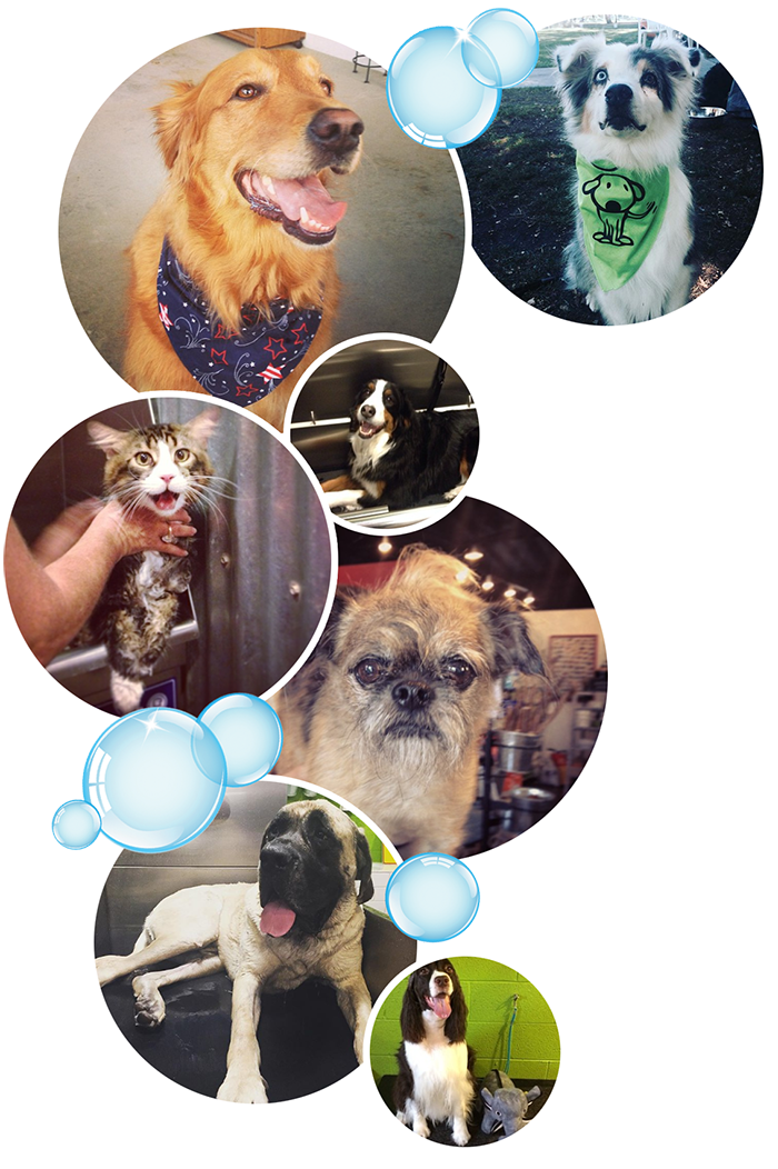 Taller collage of various pets and bubbles.