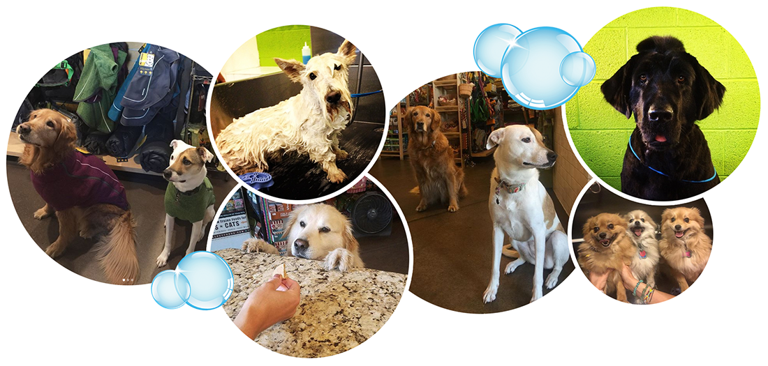 Collage of various dogs with bubbles.