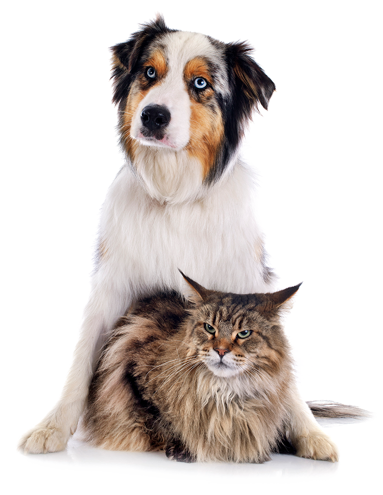 Dog and cat together on isolated background.