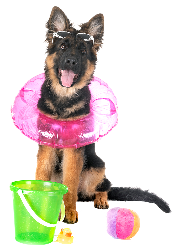 Dog with beach toys and an innertube